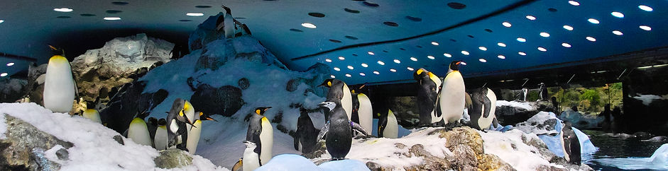 Top places to see in Tenerife - Loro Parque