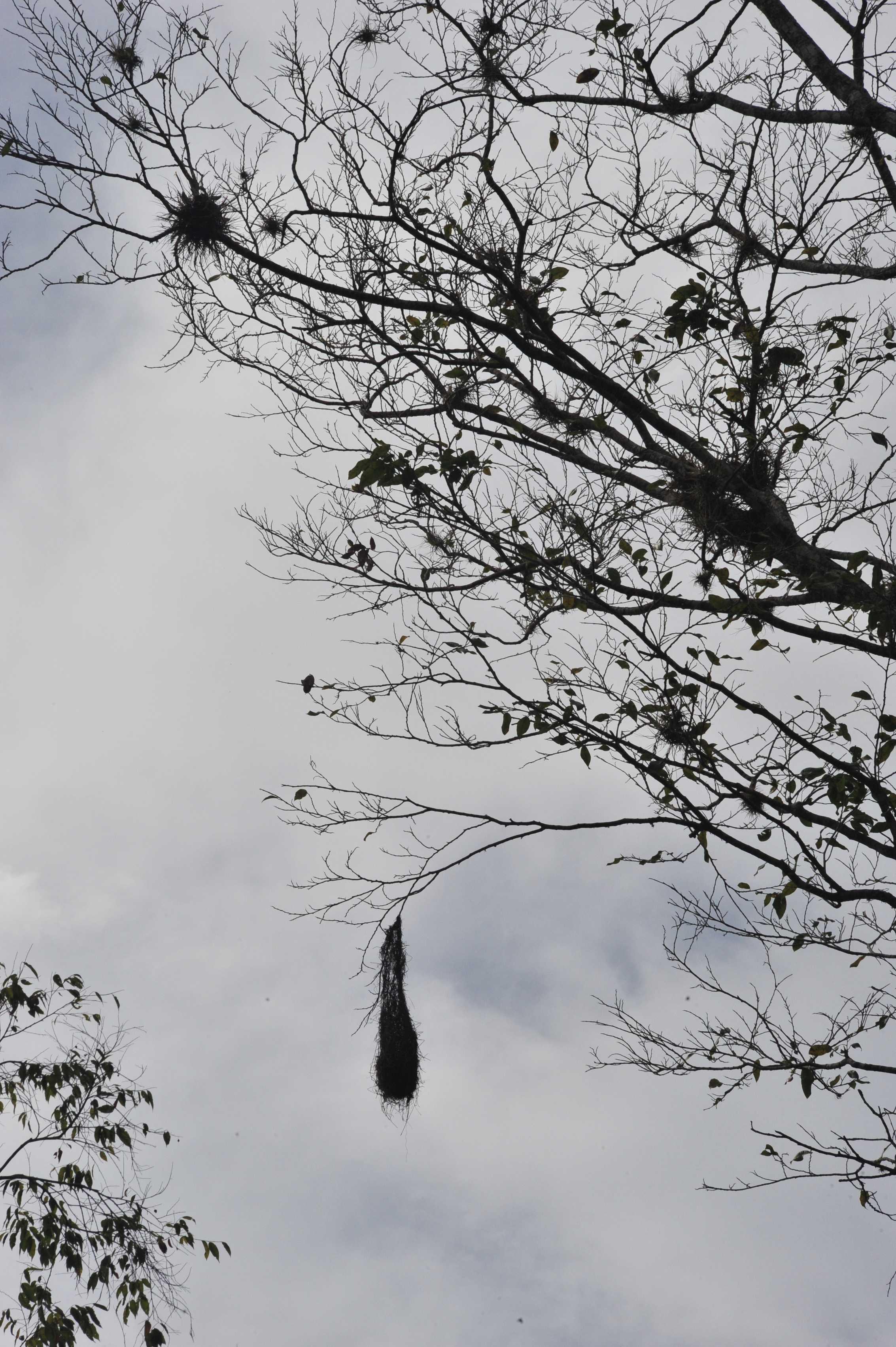 Bird nest, Sierra Madre mountains