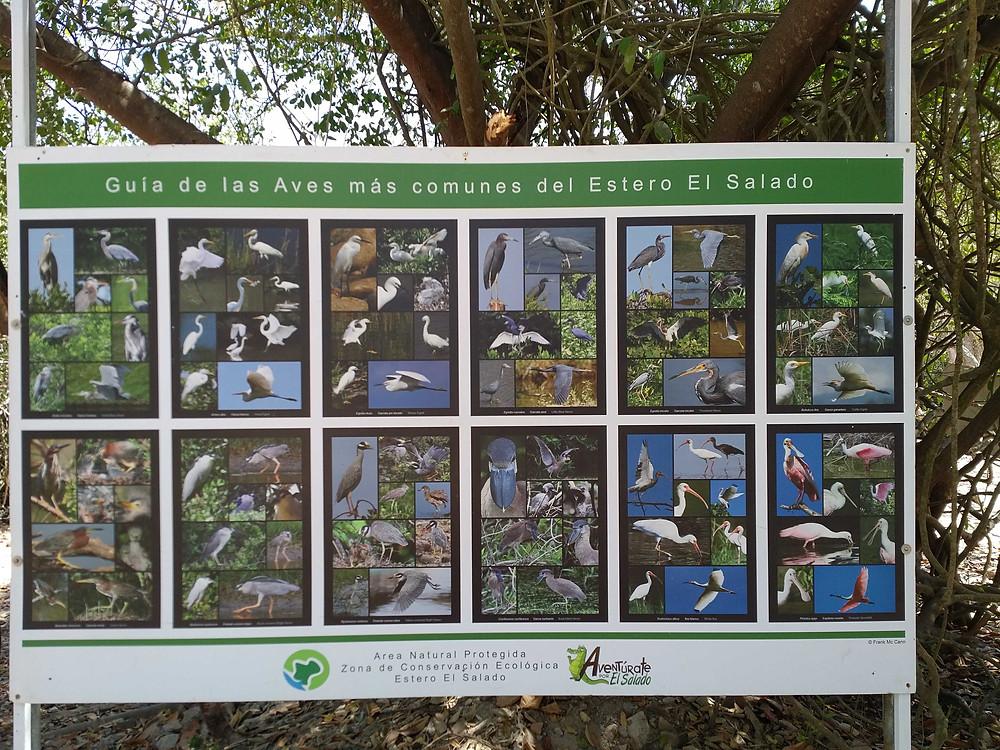 Some of the birds you can see in Estero el Salado