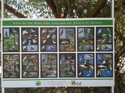 Some of the common bird you can see in Estero el Salado Puerto Vallarta