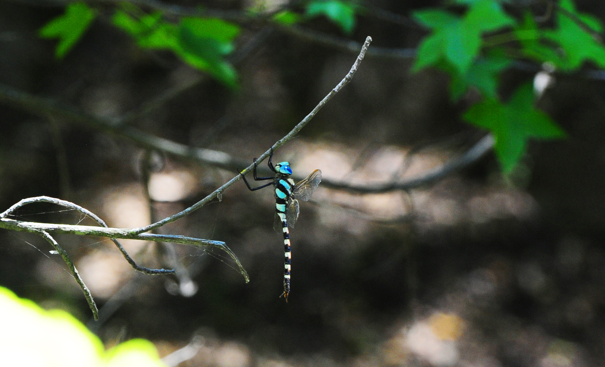 A dragonfly at Butterfly Valley