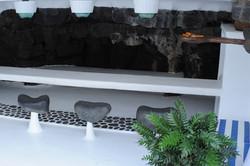 The bar at Jameos del Agua