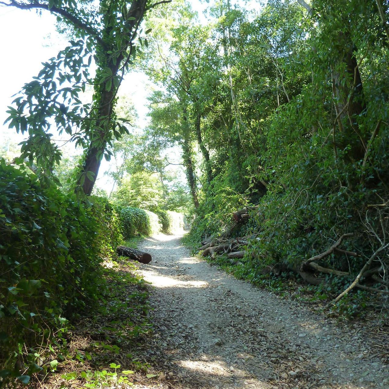 Rampa da Pena hiking trail