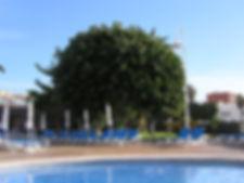 Iberostar Torviscas Playa hotel Tenerife, pool area