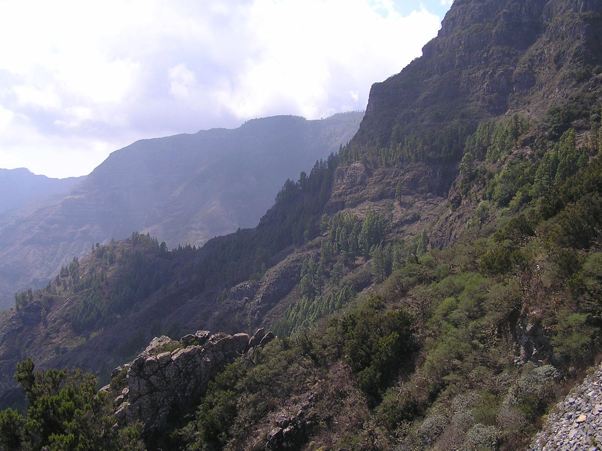 Garajonay National Park, La Gomera