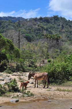 Horse in Quimixto
