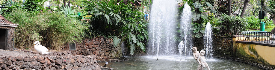 Funchal things to do - a park in the centre - Guide to Madeira sights