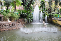 Park in the centre of Funchal