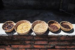 Coffee plantation, San Sebastian del Oeste