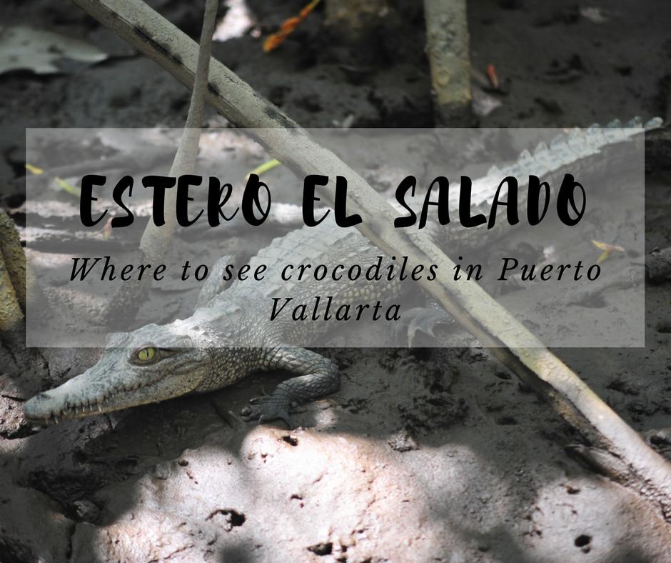 Estero el salado - where to see crocodiles in Puerto Vallarta