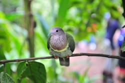 Friendly bird at Naturospace, Honfleur