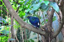 Bird at Naturospace, Honfleur, giving the evil look