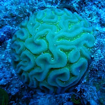 Corales Tulum Profile photo.jpg