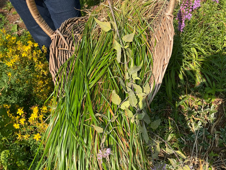 Sweetgrass (a.k.a. Mother Earth's Hair)