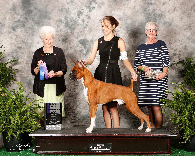Dog Training Houston Kingwood Crosby
