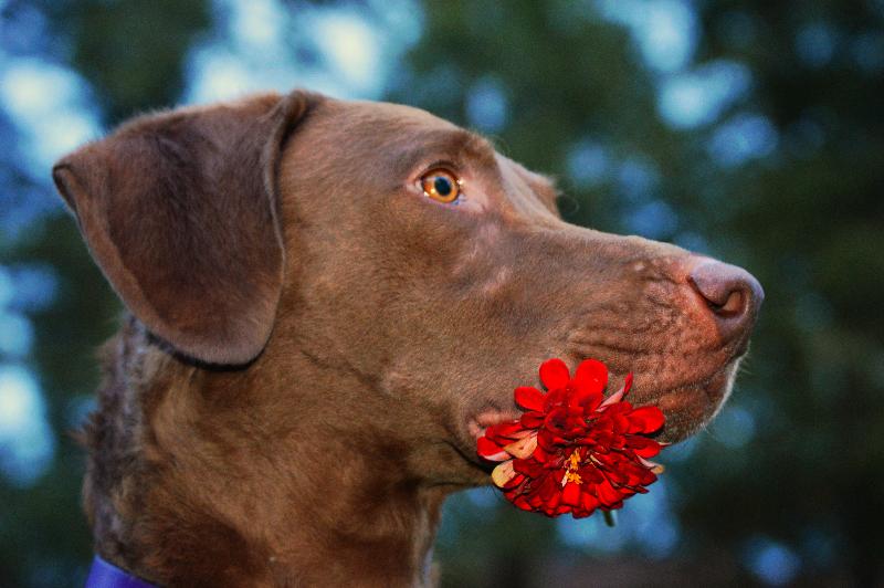 Dog training Kingwood Crosby Houston