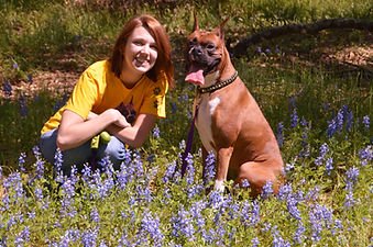 services and rates dog training clicker training