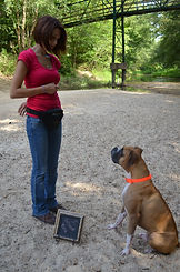 clicker dog, clicker training, dog training, Crosby, Kingwood, Houston,