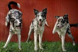 Dog training Crosby Kingwood Houston