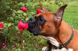 Dog training Crosby Houston Kingwood