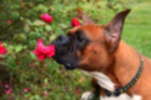 essential oils dog