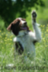 dog training clicker training Crosby