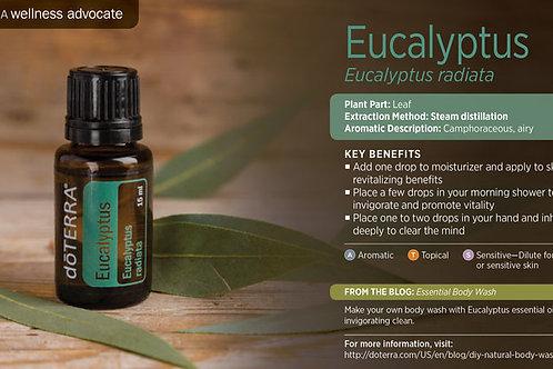 Eucalyptus 15 mL