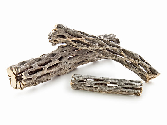 Cholla Wood 15 cm.