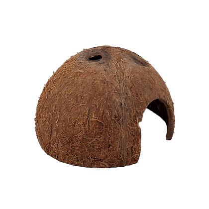 Cocos Cava L