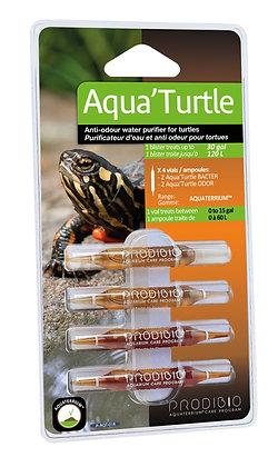 Aqua Turtle 04