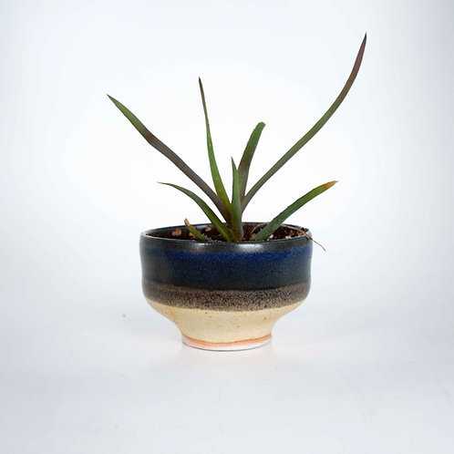 Small Plant and Pot