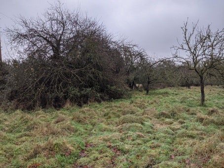 Chater Field Orchard, Ketton