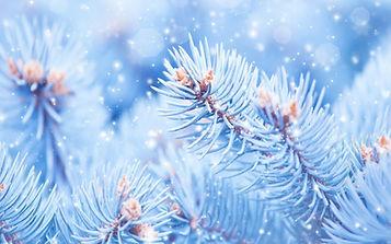 vetki-sneg-el-priroda.jpg