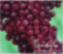 Wine art painting of red grapes