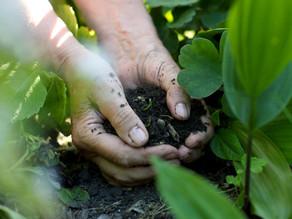 Agricultura Regenerativa - O Futuro da Agricultura