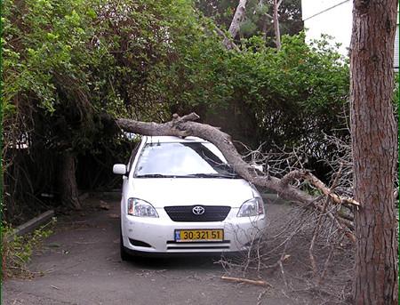 עץ על מכונית