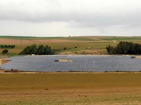 """הצעות של פחות מ-15 אג' לקוט""""ש במכרז האחרון לשדות סולאריים בישראל"""