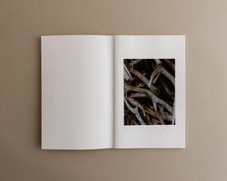 Symbiosis book 02 0002