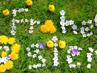 Wir wünschen ein frohes Osterfest