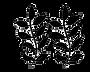 IMG_5870_edited_edited.png