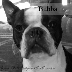 Bio_Bubba.png