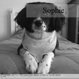 Bio_Sophie.png