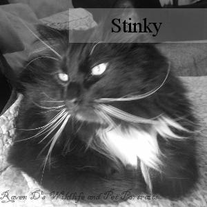 Bio_Stinky.png