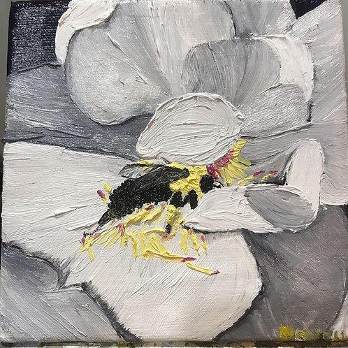 Mini Bee on Magnolia