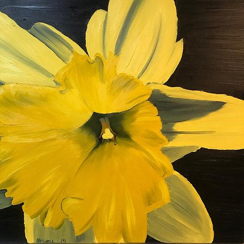 Daffodil on Black.