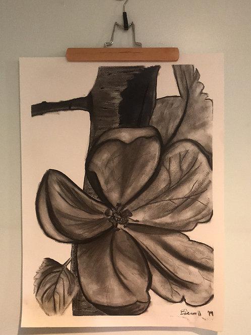 Dogwood bloom-Charcoal