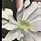 Thumbnail: Cactus Blossom Card.
