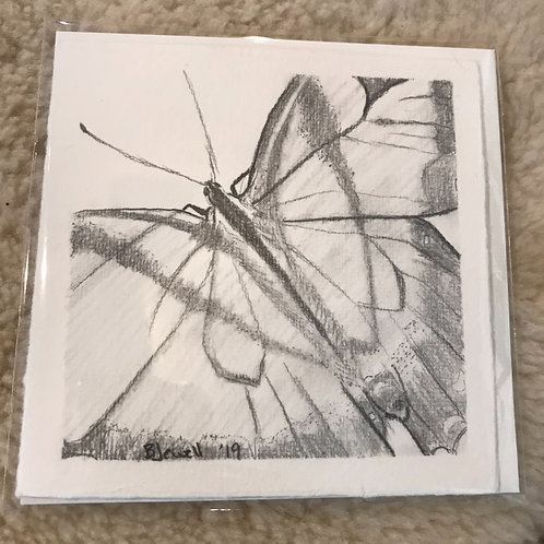 Holly River butterfly Card