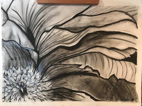 Peony-charcoal