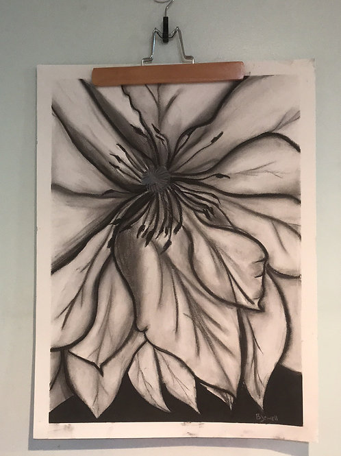 Clematis-Charcoal